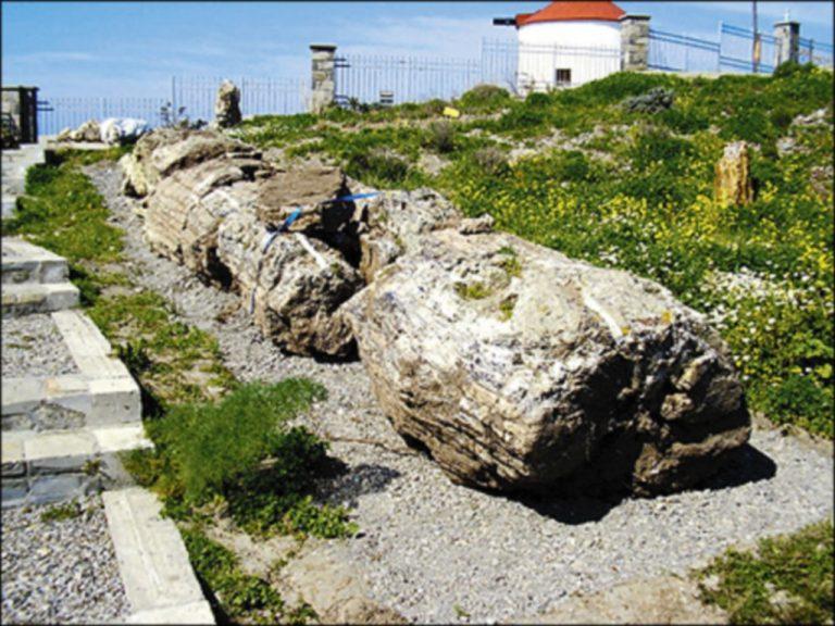 Η πλούσια πανίδα του Απολιθωμένου Δάσους Λέσβου | Newsit.gr