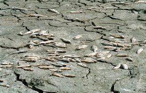 Η ρύπανση από το ΧΥΤΑ Μαυροράχης σκότωσε τα ψάρια στο ρέμα Μπογδάνα