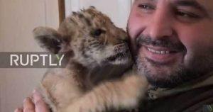 Αυτός είναι ο Τσάρος – Ένας λίγρης καρπός του έρωτα ανάμεσα σε τίγρη και λιοντάρι [pic, vid]
