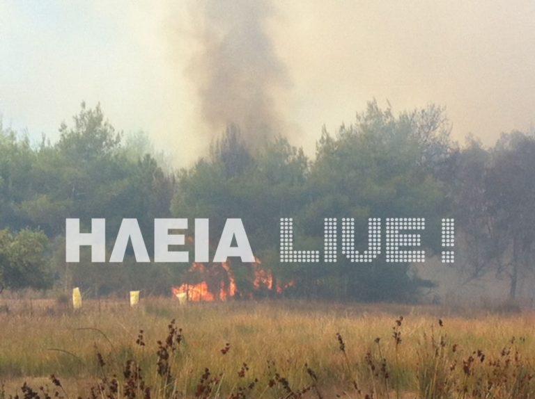 Ηλεία: Υπό μερικό έλεγχο η φωτιά στο δάσος της Σπιάτζας – ΦΩΤΟ | Newsit.gr
