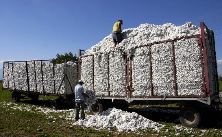 Λαμία: Αγρότες μαϊμου έπαιρναν επιδοτήσεις! | Newsit.gr