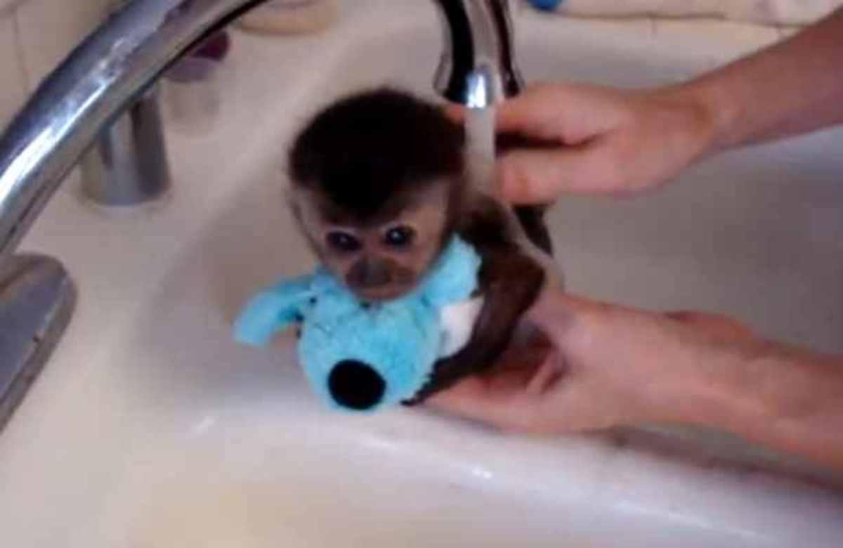 To πιο γλυκό βίντεο που έχετε δεί – Μαϊμουδάκι κάνει μπάνιο | Newsit.gr