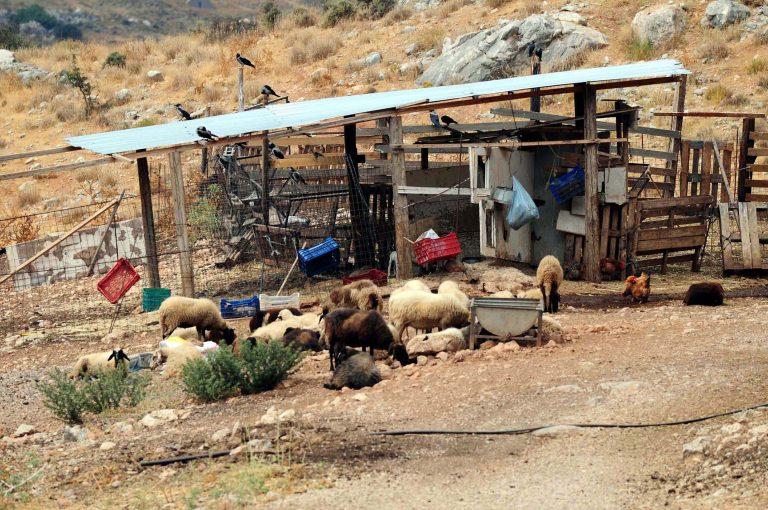 Σέρρες: Βρέθηκε νεκρός κτηνοτρόφος | Newsit.gr