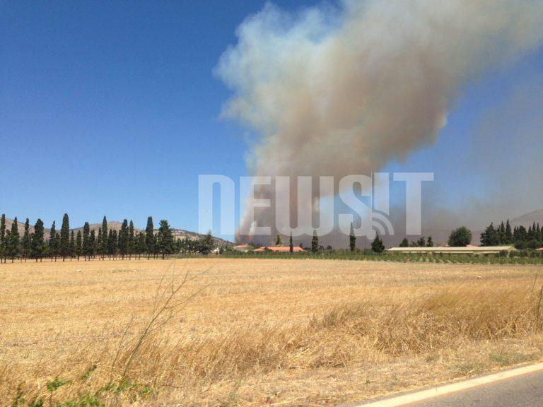 Σε εξέλιξη φωτιά στον οικισμό Αύρα στον Μαραθώνα – Εκκενώνεται η περιοχή – Επιχειρούν ισχυρές δυνάμεις της Πυροσβεστικής | Newsit.gr