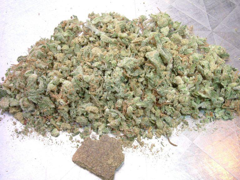 Αλβανία: Συνελήφθησαν 5 νεαροί με 2 τόνους μαριχουάνας | Newsit.gr