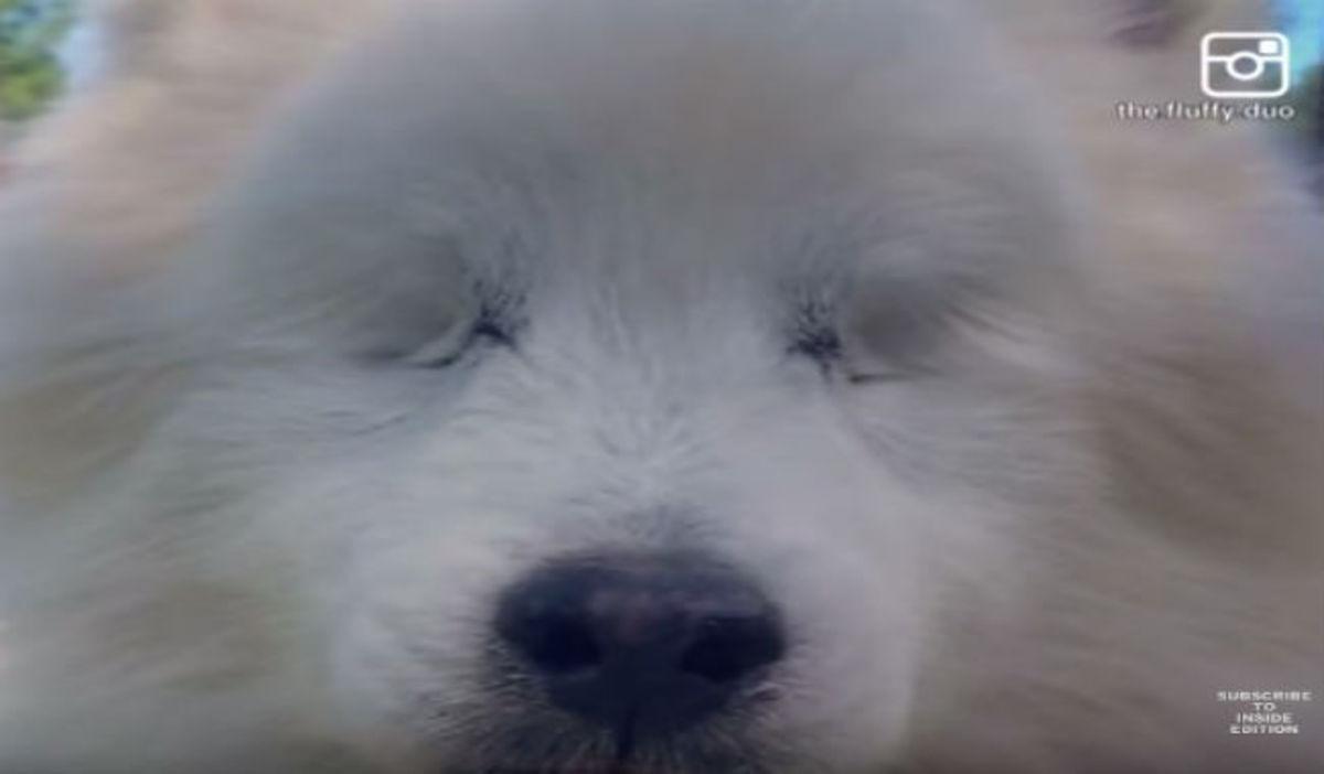 Αυτός ο σκύλος έχασε τα δύο του μάτια εξαιτίας μιας πάθησης – Δείτε πως συνεχίζει κανονικά τη ζωή του! (vid)