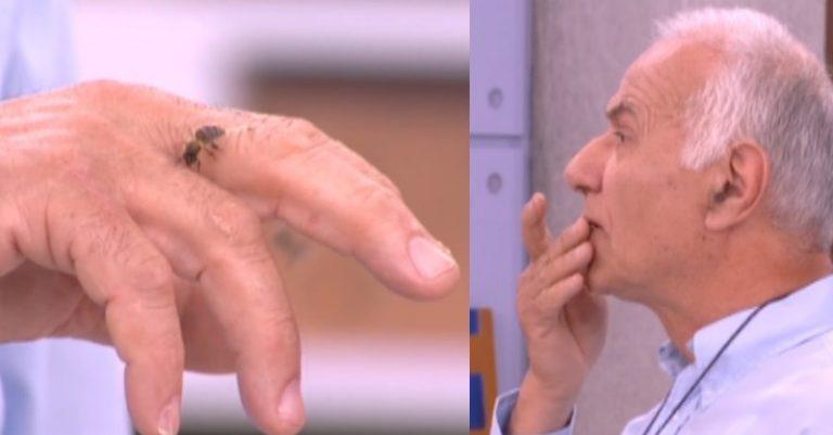 Μέλισσες στο Πρωινό mou! Τσίμπησε τον μελισσοκόμο και την έφαγε ζωντανή! Σάσα Σταμάτη: «Το 'χεις κάψει ε»; | Newsit.gr