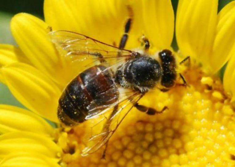 Εύβοια: Μια μέλισσα προκάλεσε… τροχαίο!   Newsit.gr