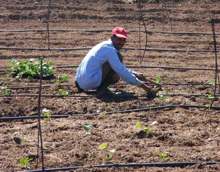 Ηγουμενίτσα: Λαθρομετανάστες σε ρόλο… επίμονου κηπουρού! | Newsit.gr