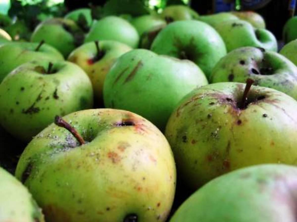 Ζητούν εντατικούς ελέγχους για τα σάπια φρούτα στα σχολεία | Newsit.gr