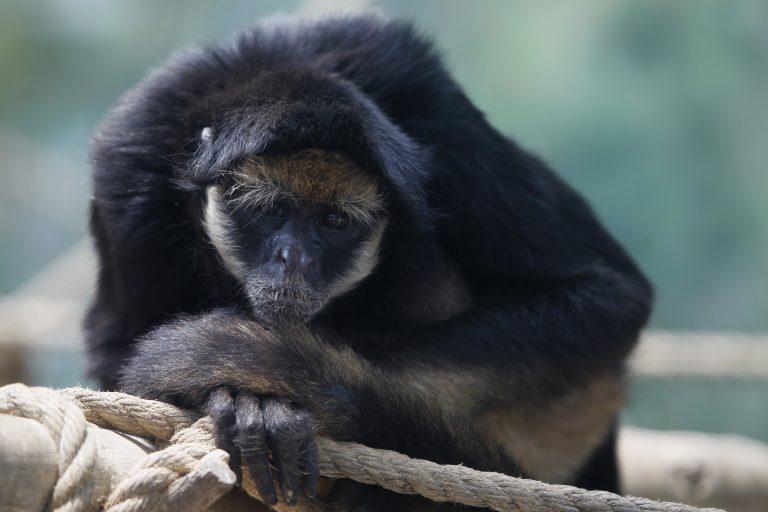 Διέρρηξε ζωολογικό κήπο για να δολοφονήσει πίθηκο! | Newsit.gr