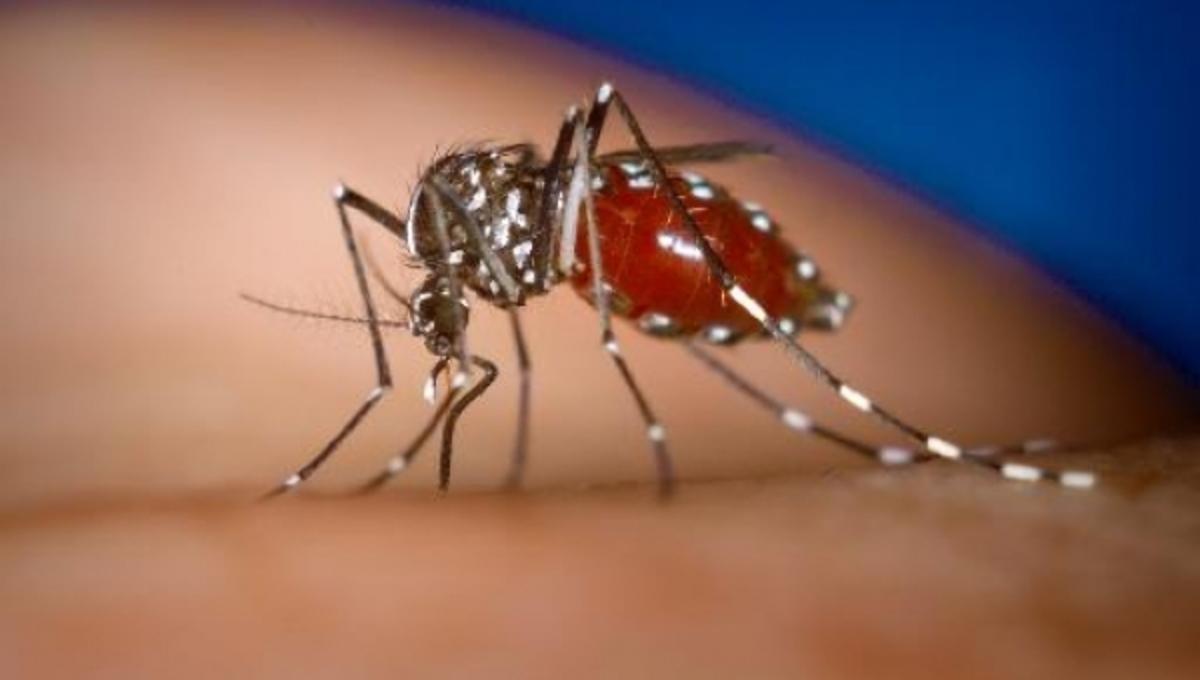 Γιατί γίνεται ανθεκτικότερη η ελονοσία; | Newsit.gr