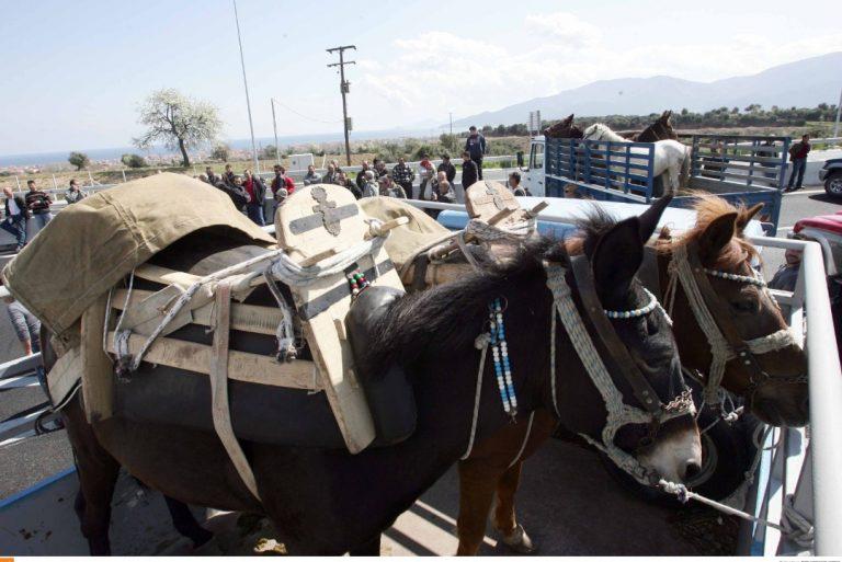 Θεσσαλονίκη: Μπλόκο με μουλάρια και άλογα! | Newsit.gr