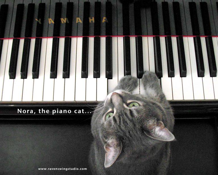 Νόρα:η γάτα που παίζει πιάνο! | Newsit.gr