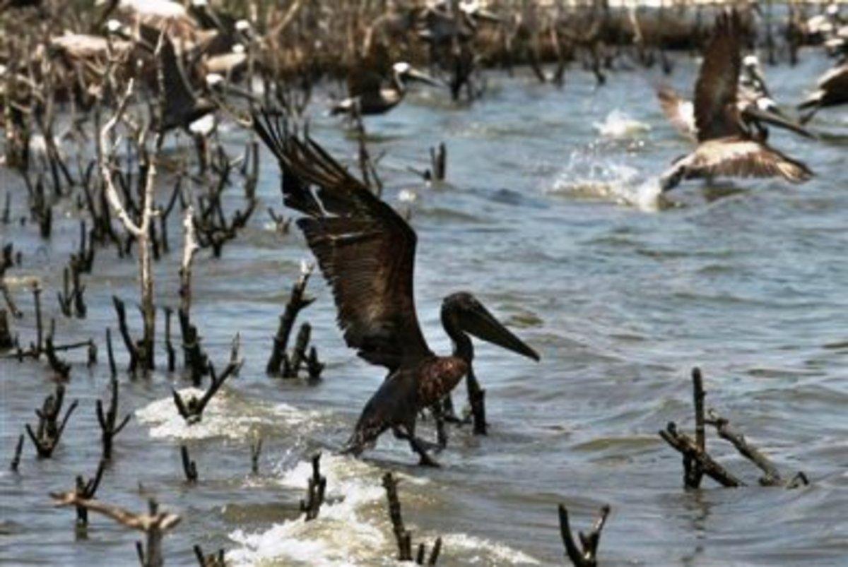 ΗΠΑ: Τεράστια η οικολογική καταστροφή από την πετρελαιοκηλίδα … | Newsit.gr