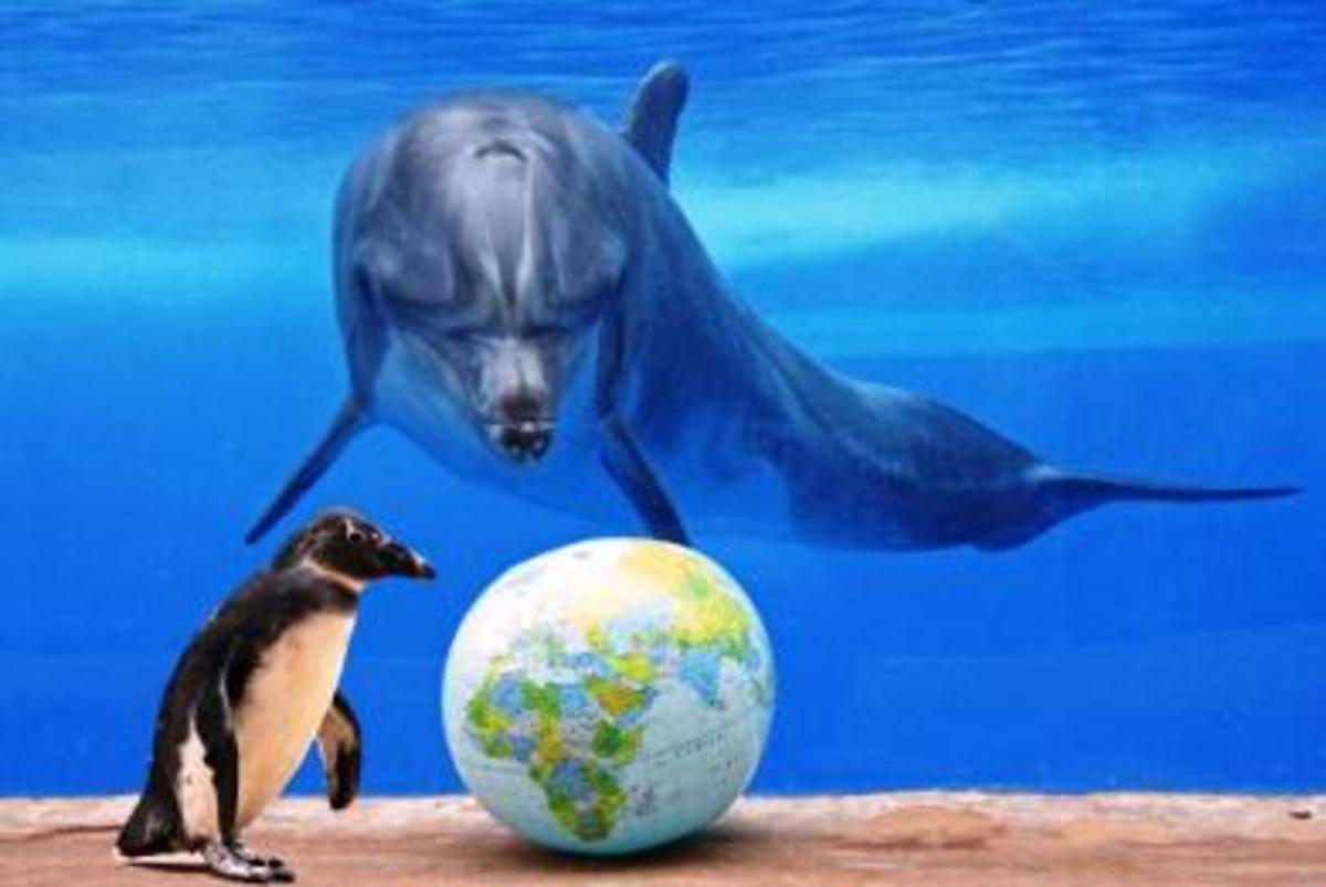 300.000 φάλαινες, δελφίνια και φώκιες πεθαίνουν κάθε χρόνο παγιδευμένα σε δίχτυα… | Newsit.gr