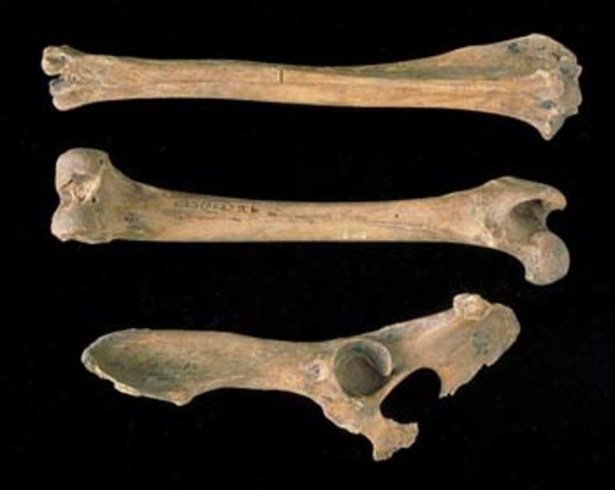 Ανακάλυψαν τα όστα ενός σκύλου ηλικίας 16.000 ετών | Newsit.gr