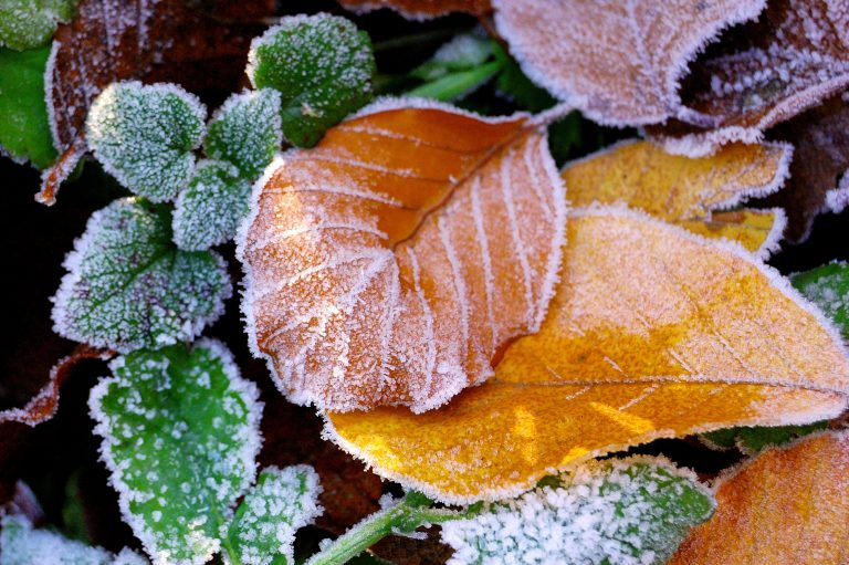 Κρύο και σήμερα – Ανεβαίνει λίγο η θερμοκρασία το μεσημέρι | Newsit.gr