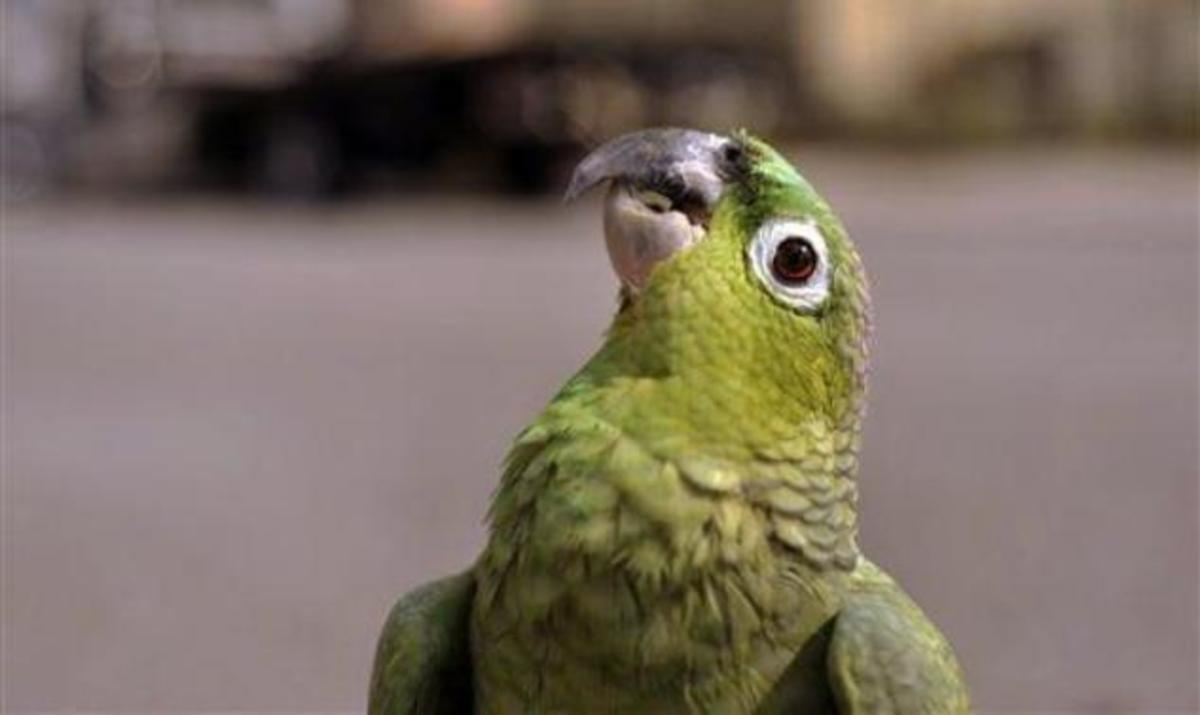 Προσοχή , βροχή από παπαγάλους ! | Newsit.gr