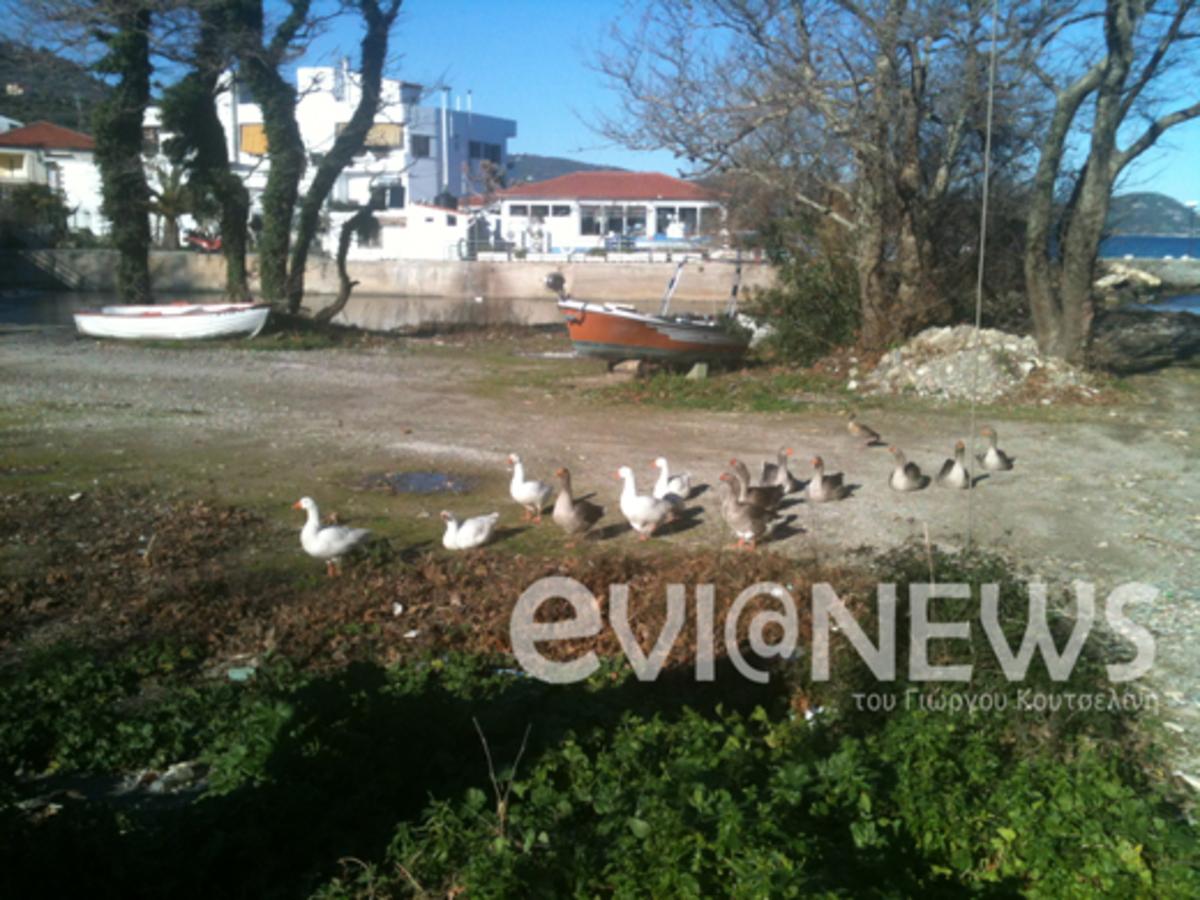 Εύβοια: Οι πάπιες έκαναν μικρούς και μεγάλους να »κολλήσουν»! | Newsit.gr