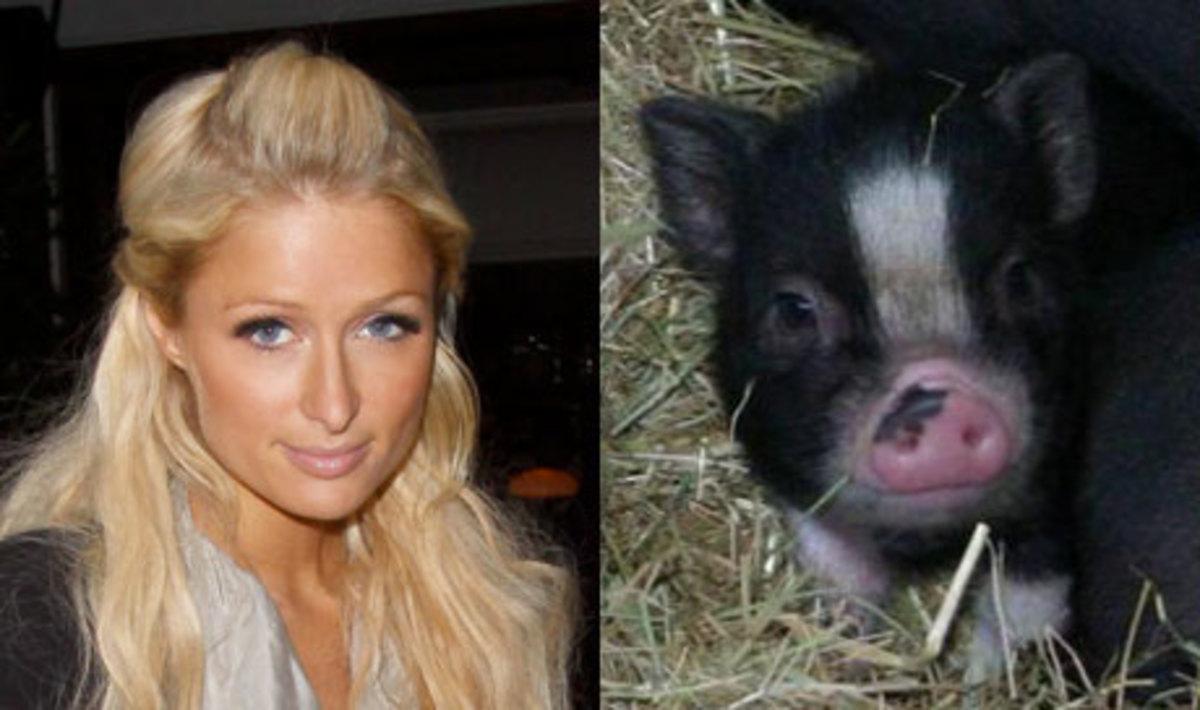 Η Π.Χίλτον κοιμάται με ένα γουρούνι! | Newsit.gr