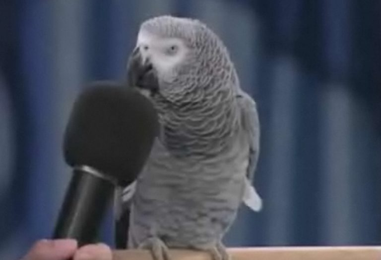 Ο πιο ομιλητικός παπαγάλος του κόσμου! – BINTEO   Newsit.gr