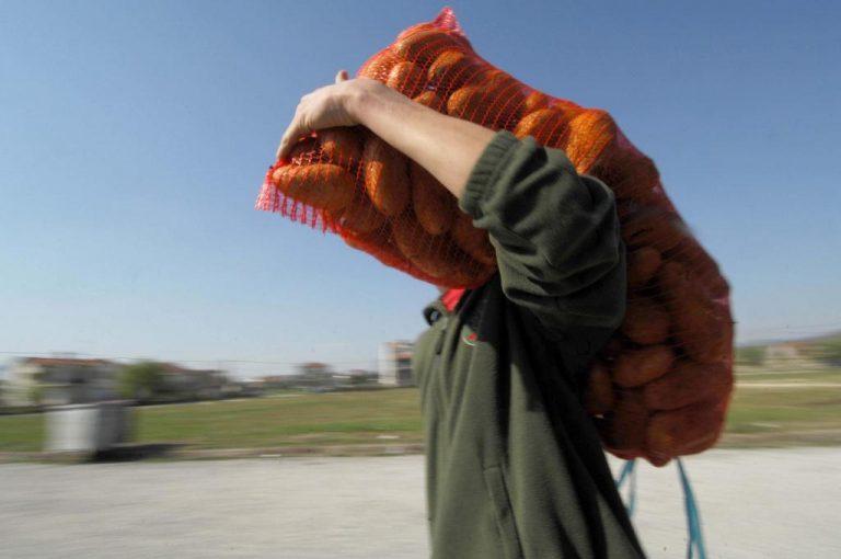 Πατάτες Νευροκοπίου και στην Κρήτη | Newsit.gr