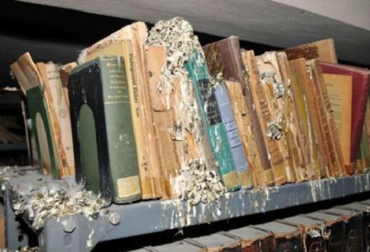 Πάτρα: Τα περιστέρια κατέστρεψαν σπάνια βιβλία!   Newsit.gr