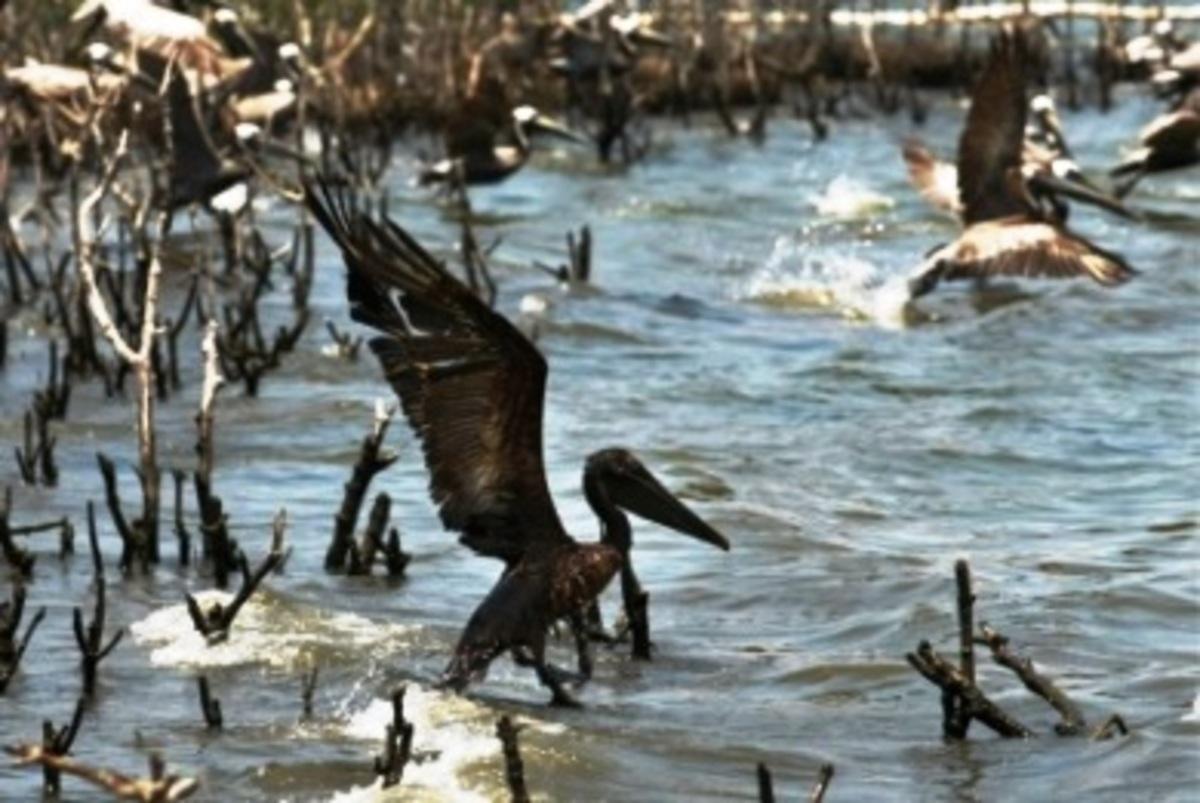 Κόλπος Μεξικού: φόβοι για τη δημιουργία «νεκρής ζώνης» | Newsit.gr