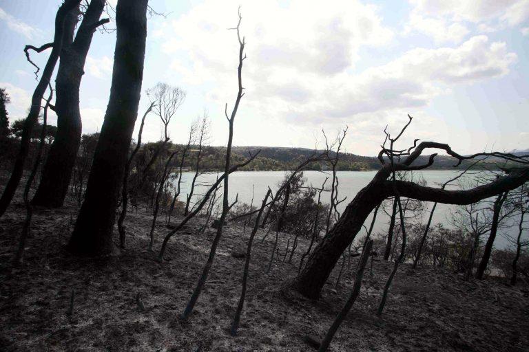 Ποιές περιοχές κινδυνεύουν την Κυριακή για πυρκαγιές | Newsit.gr