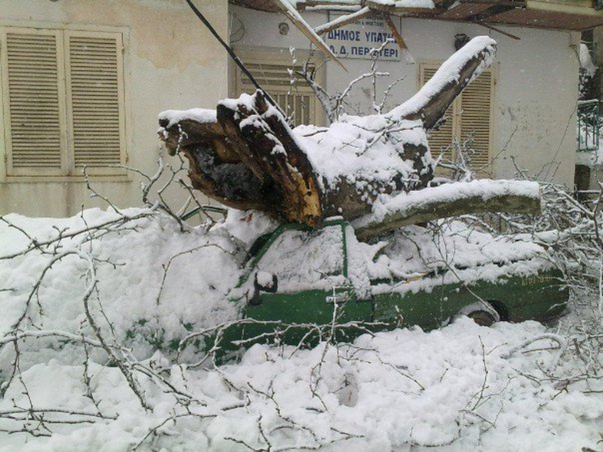 Φθιώτιδα: Το χιόνι έριξε πλάτανο στο δρόμο – Δείτε τις ζημιές που προκάλεσε… | Newsit.gr