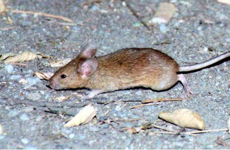 Κρήτη: Ποντίκι δάγκωσε μωρό που ζούσε σε τρώγλη! | Newsit.gr