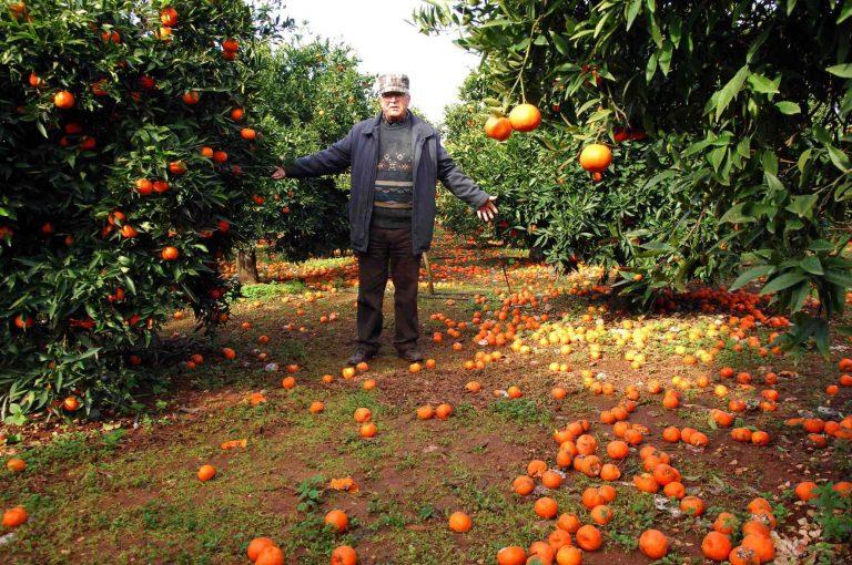 Αργολίδα: Μεγάλες καταστροφές για αγρότες | Newsit.gr