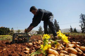 Επιστήμονες καλλιέργησαν πατάτες σε συνθήκες παρόμοιες με του πλανήτη Άρη