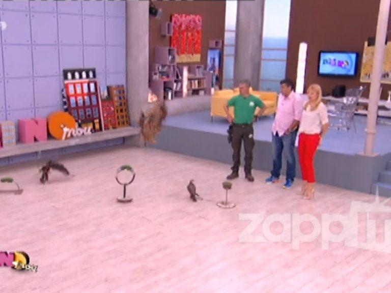 Αγρίεψαν τα πουλιά στο πλατώ του «Πρωινό mou»! O Λιάγκας τρελάθηκε με τον μπούφο! | Newsit.gr