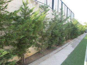 «Πρασινίζουν» οι αυλές σχολείων στη Θεσσαλονίκη!