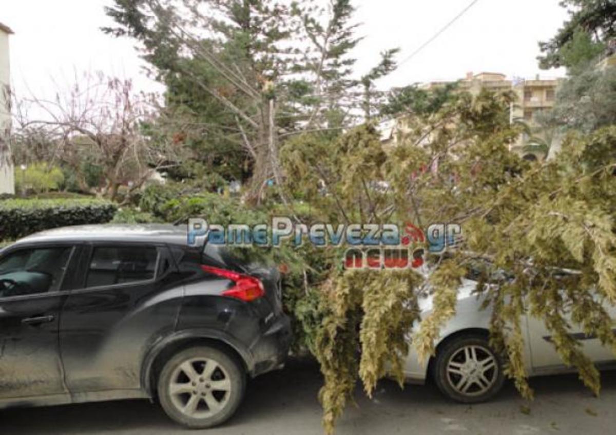 Πρέβεζα: Ισχυροί άνεμοι στην πόλη – Δέντρο έπεσε πάνω σε αυτοκίνητα πριν την παρέλαση – BINTEO   Newsit.gr