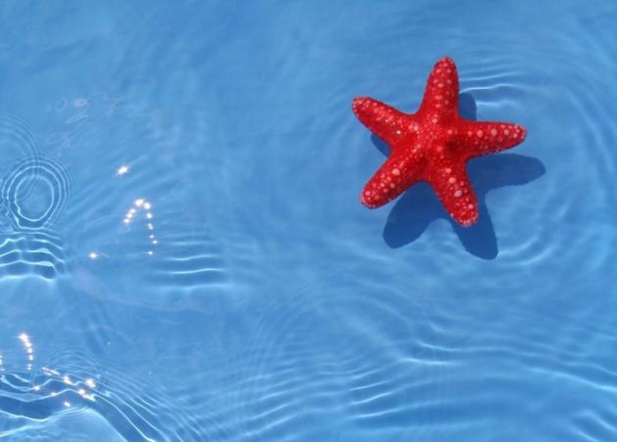 ΖΩΔΙΑ: Εβδομαδιαίες προβλέψεις από 27 Αυγούστου ως 2 Σεπτεμβρίου. Τι δείχνουν τα άστρα; | Newsit.gr