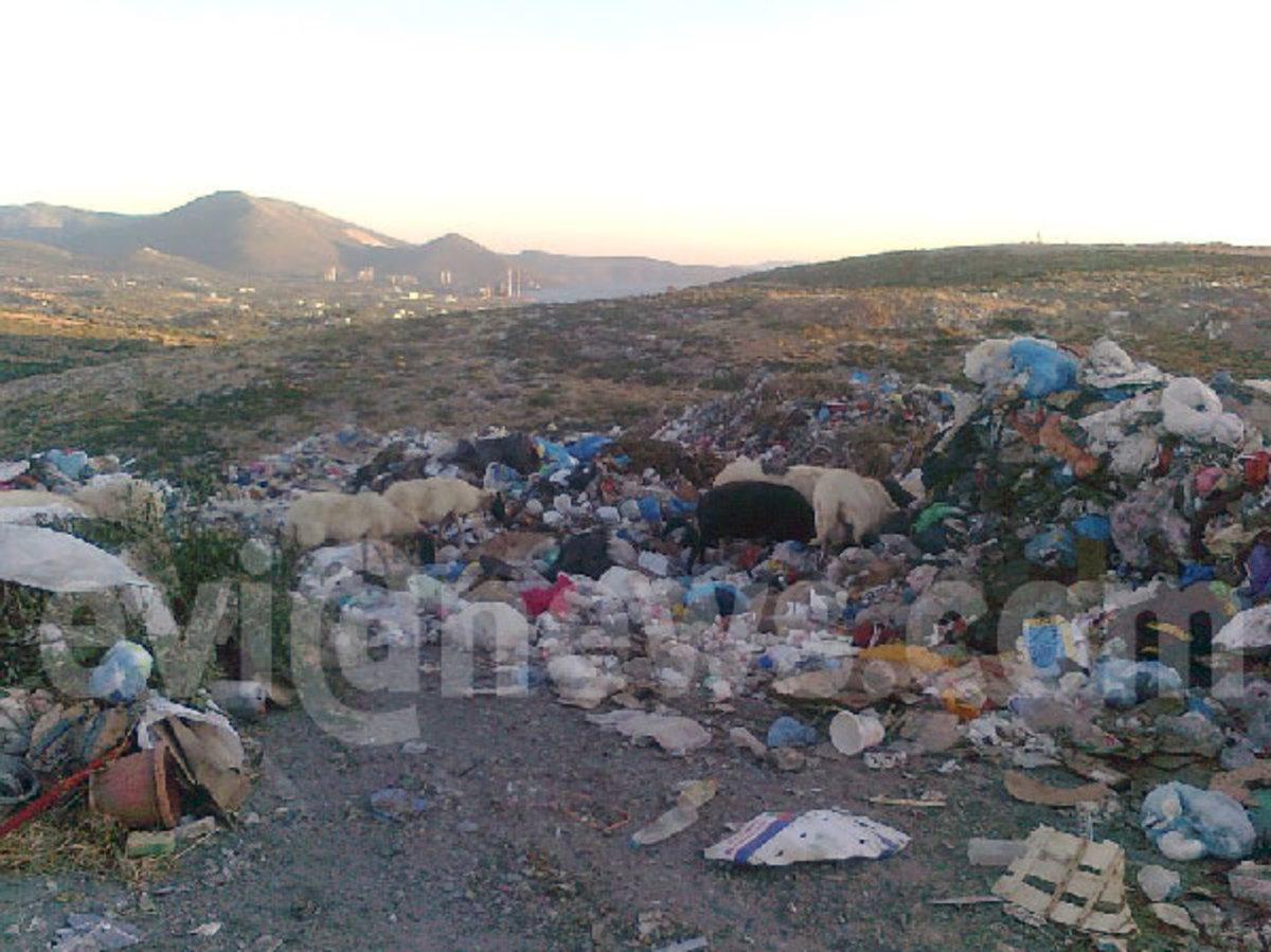 Εύβοια: Τα πρόβατα βόσκουν στα… σκουπίδια! | Newsit.gr