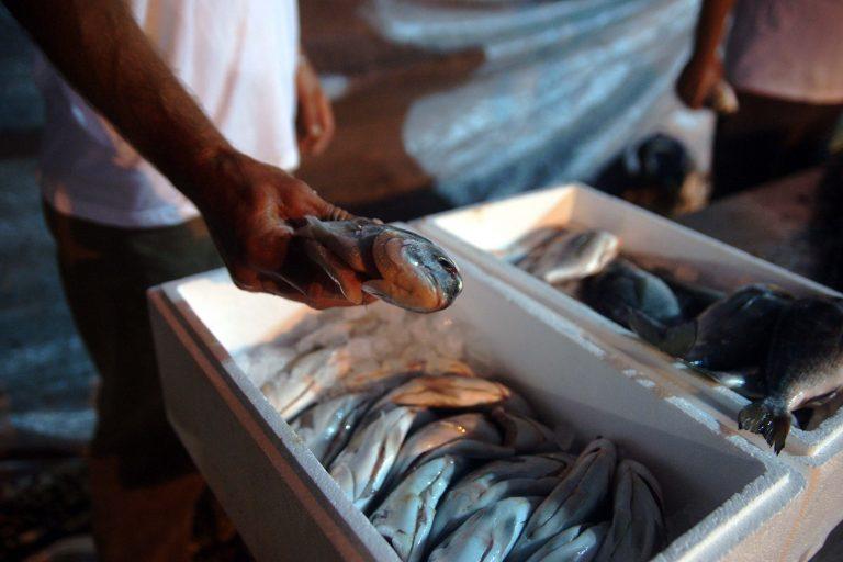 Κατασχέθηκαν 4 τόνοι ψαριών που θα έστελναν σε ιδρύματα | Newsit.gr