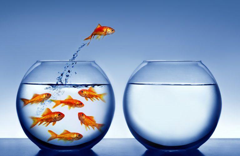 «Ψαρώ-στε» υγιεινά! | Newsit.gr