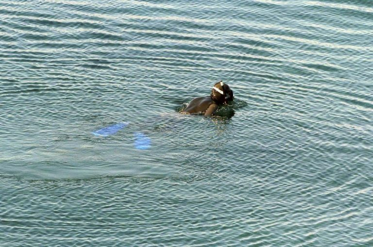 Βρέθηκε νεκρός ο 28χρονος ψαροντουφεκάς που αγνοείτο στη Σκύρο   Newsit.gr