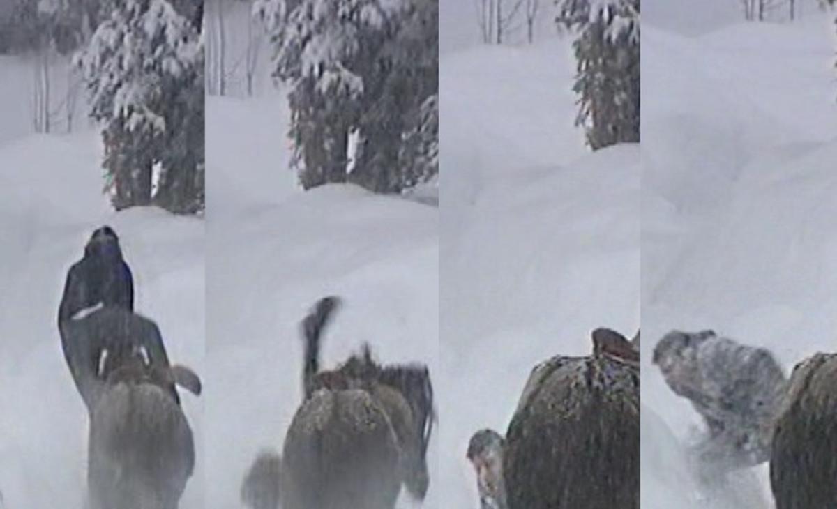 Ποιον τραγουδιστή πέταξε κάτω το άλογο;   Newsit.gr