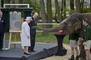 Ο ελέφαντας που αγάπησε τη Βασίλισσα [pics, vid]
