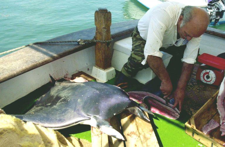 Χανιά: Τραυματισμός ψαροτουφεκά από σαλάχι | Newsit.gr