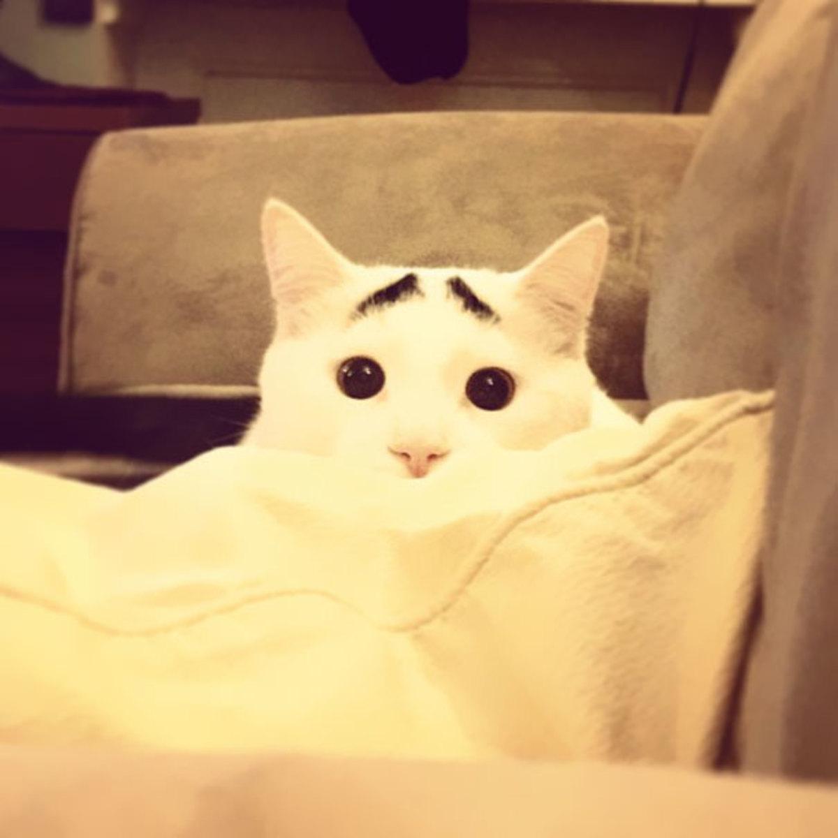 Εσείς είδατε τον Σαμ; Την γάτα με τα φρύδια; | Newsit.gr