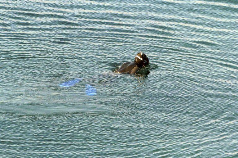 Σάμος: Nεκρός εντοπίστηκε αγνοούμενος ψαροτουφεκάς   Newsit.gr