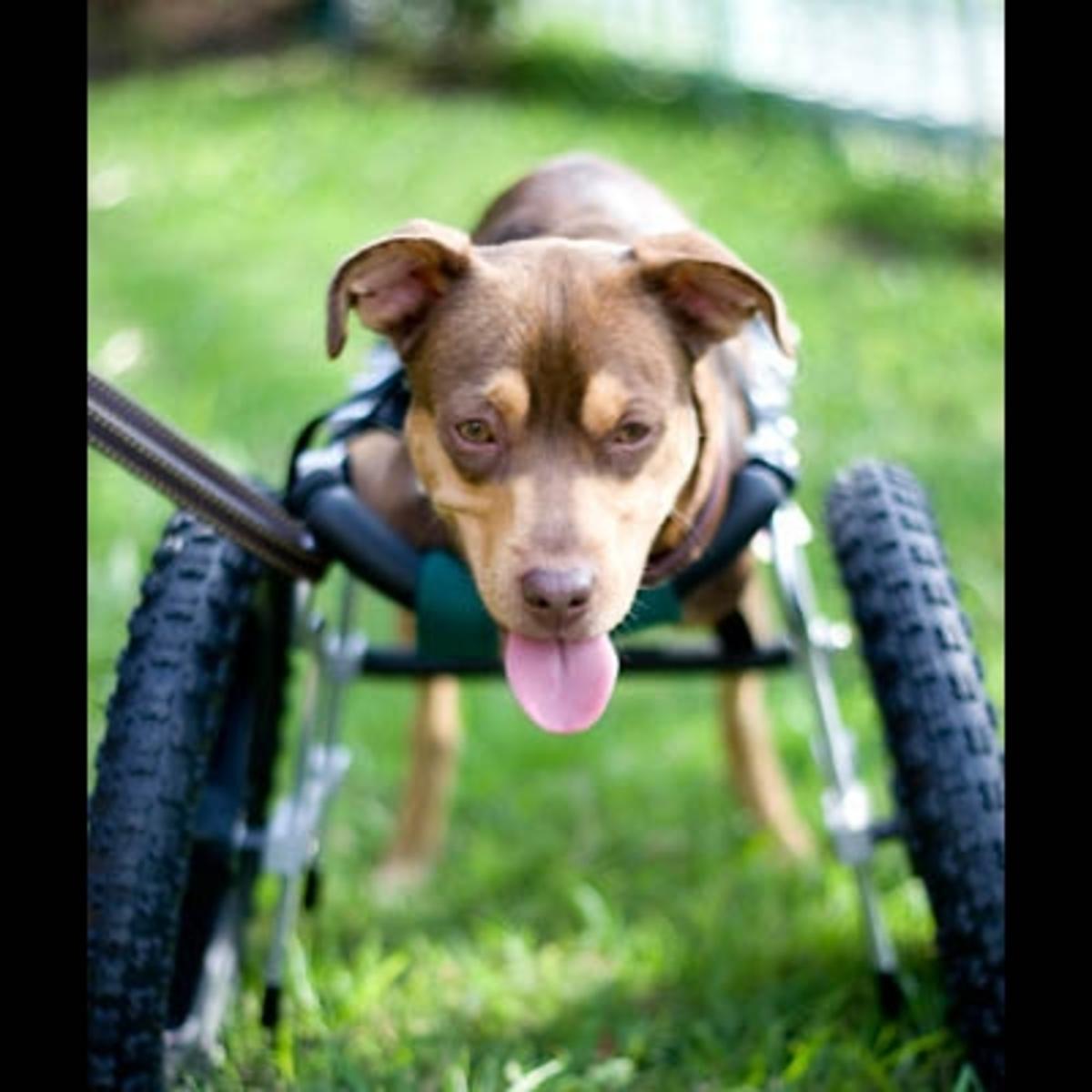 Τα παιδιά του Τζάκσον βοηθάνε ανάπηρο σκυλάκι | Newsit.gr