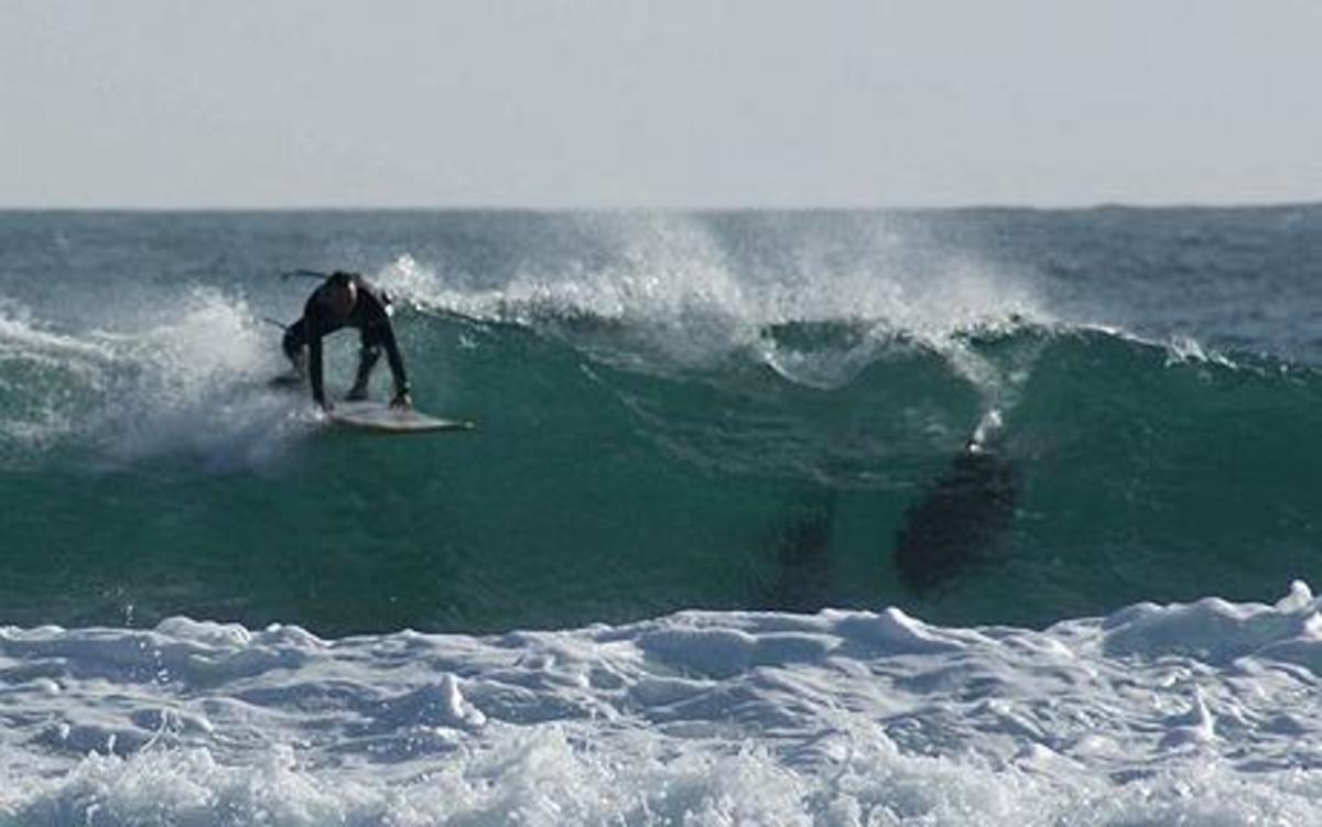 Λευκός καρχαρίας κατασπάραξε έναν 20χρονο σέρφερ | Newsit.gr