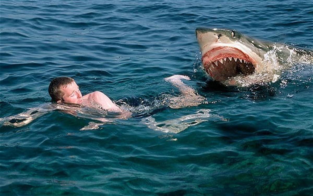 Πήγε για κολύμπι και… τον κατασπάραξε καρχαρίας! | Newsit.gr